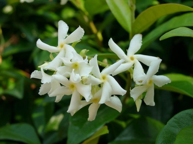 Una chicca sull'aromaterapia